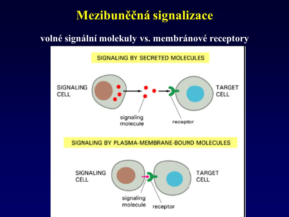 Signaling molecules Intra- and extracellular Extracellular signaling molecules bind to either cell-surface receptors or intracellular receptors.