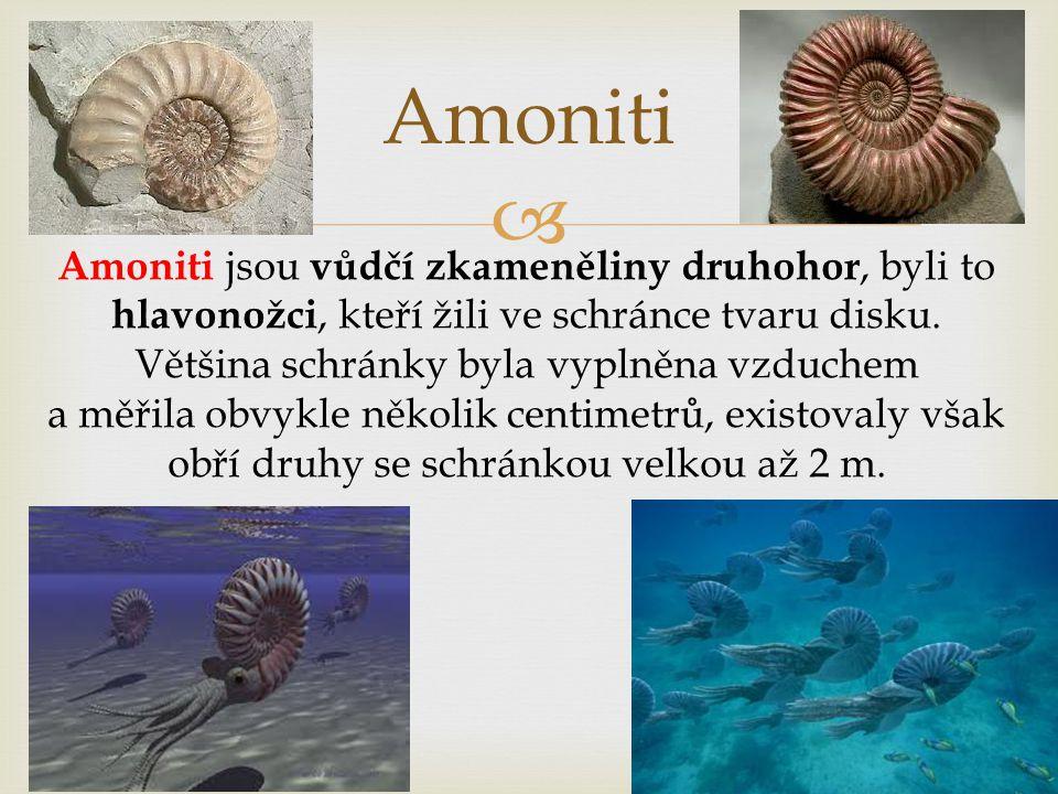  Amoniti Amoniti jsou vůdčí zkameněliny druhohor, byli to hlavonožci, kteří žili ve schránce tvaru disku. Většina schránky byla vyplněna vzduchem a m