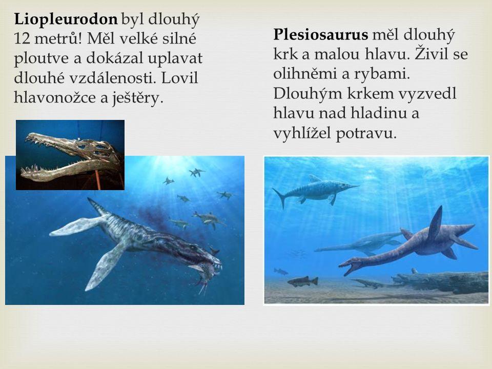 Liopleurodon byl dlouhý 12 metrů! Měl velké silné ploutve a dokázal uplavat dlouhé vzdálenosti. Lovil hlavonožce a ještěry. Plesiosaurus měl dlouhý kr