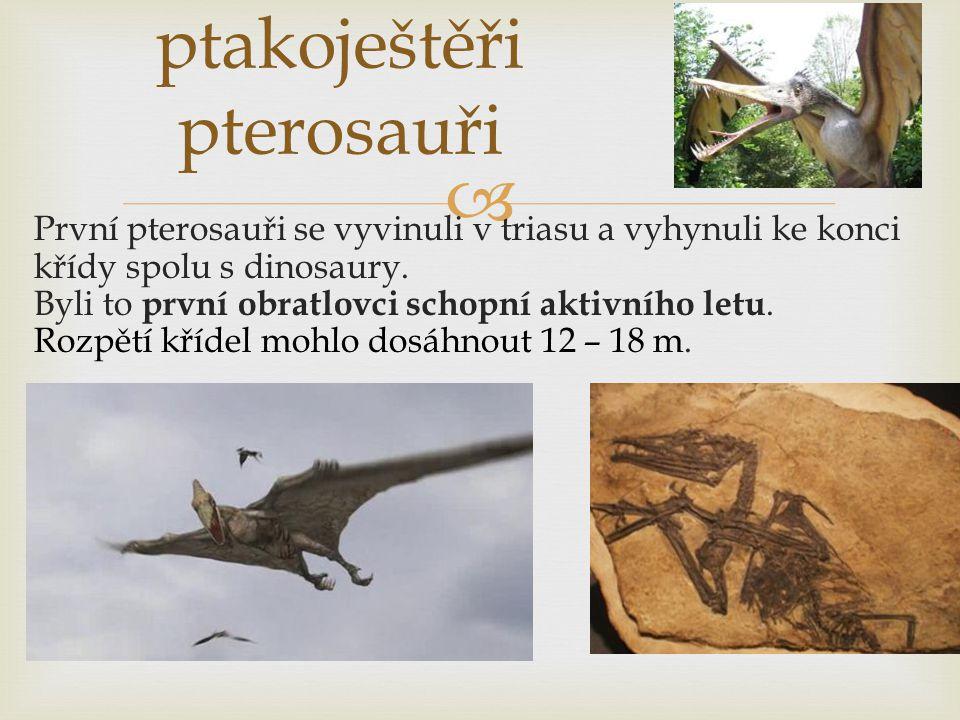  ptakoještěři pterosauři První pterosauři se vyvinuli v triasu a vyhynuli ke konci křídy spolu s dinosaury. Byli to první obratlovci schopní aktivníh