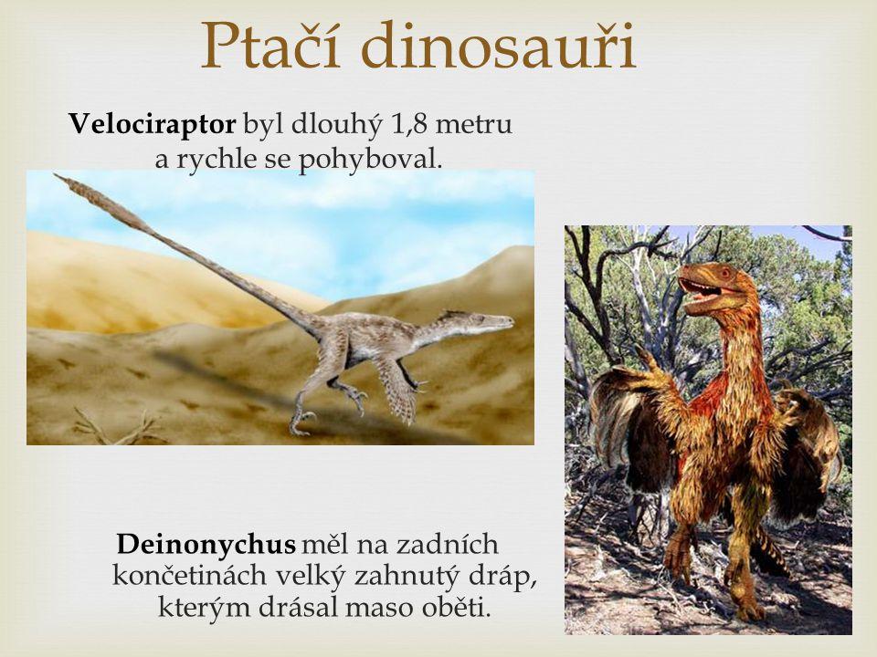 Ptačí dinosauři Velociraptor byl dlouhý 1,8 metru a rychle se pohyboval. Deinonychus měl na zadních končetinách velký zahnutý dráp, kterým drásal maso