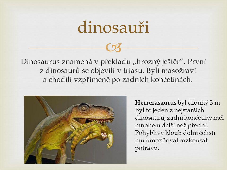 """ dinosauři Dinosaurus znamená v překladu """"hrozný ještěr"""". První z dinosaurů se objevili v triasu. Byli masožraví a chodili vzpřímeně po zadních konče"""