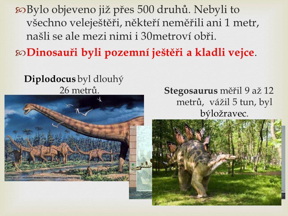  Bylo objeveno již přes 500 druhů. Nebyli to všechno veleještěři, někteří neměřili ani 1 metr, našli se ale mezi nimi i 30metroví obři.  Dinosauři b