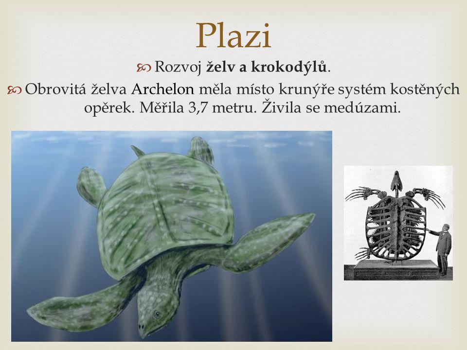 Plazi  Rozvoj želv a krokodýlů.  Obrovitá želva Archelon měla místo krunýře systém kostěných opěrek. Měřila 3,7 metru. Živila se medúzami.