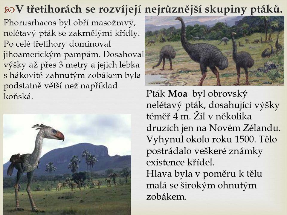  V třetihorách se rozvíjejí nejrůznější skupiny ptáků. Phorusrhacos byl obří masožravý, nelétavý pták se zakrnělými křídly. Po celé třetihory dominov