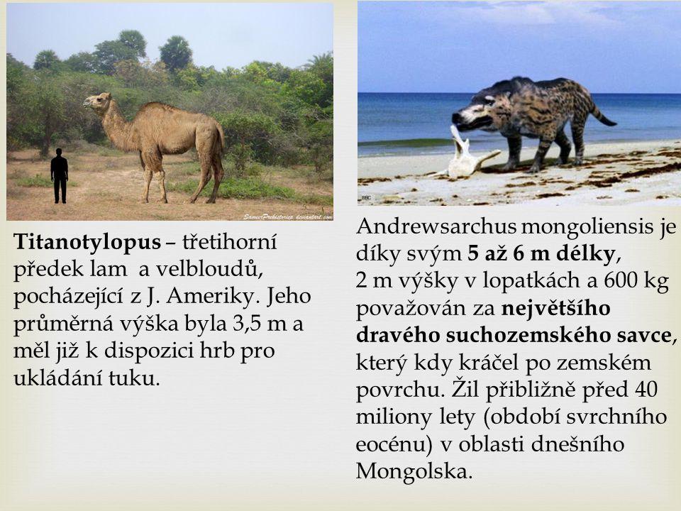 Titanotylopus – třetihorní předek lam a velbloudů, pocházející z J. Ameriky. Jeho průměrná výška byla 3,5 m a měl již k dispozici hrb pro ukládání tuk