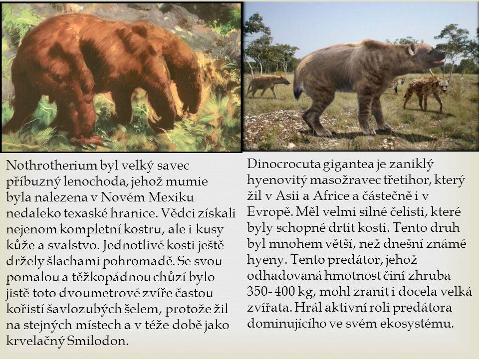 Nothrotherium byl velký savec příbuzný lenochoda, jehož mumie byla nalezena v Novém Mexiku nedaleko texaské hranice. Vědci získali nejenom kompletní k