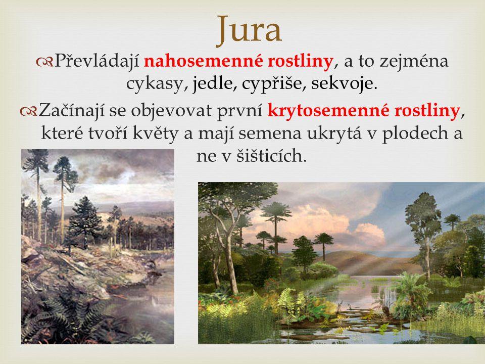 Jura  Převládají nahosemenné rostliny, a to zejména cykasy, jedle, cypřiše, sekvoje.  Začínají se objevovat první krytosemenné rostliny, které tvoří