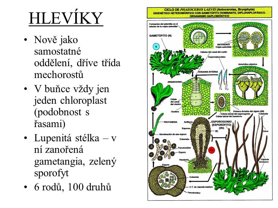 HLEVÍKY Nově jako samostatné oddělení, dříve třída mechorostů V buňce vždy jen jeden chloroplast (podobnost s řasami) Lupenitá stélka – v ní zanořená gametangia, zelený sporofyt 6 rodů, 100 druhů