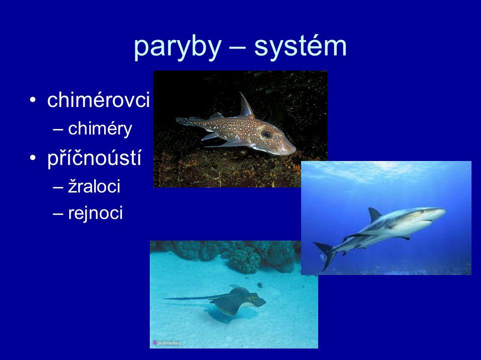 paryby – systém chimérovci –chiméry příčnoústí –žraloci –rejnoci