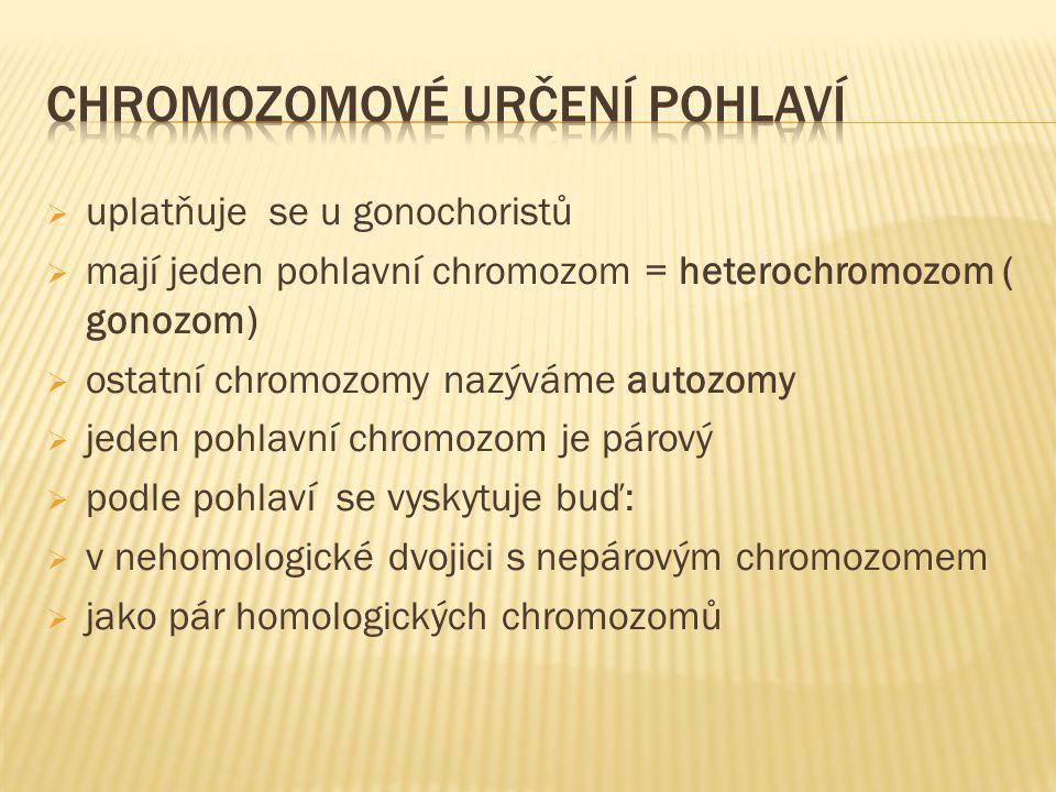  uplatňuje se u gonochoristů  mají jeden pohlavní chromozom = heterochromozom ( gonozom)  ostatní chromozomy nazýváme autozomy  jeden pohlavní chromozom je párový  podle pohlaví se vyskytuje buď:  v nehomologické dvojici s nepárovým chromozomem  jako pár homologických chromozomů