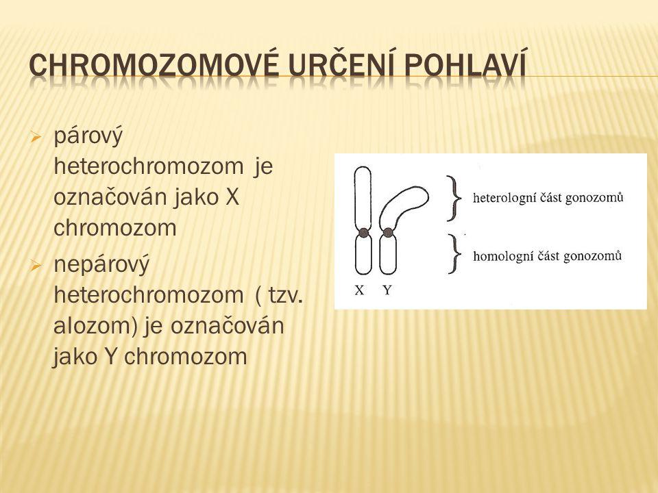  párový heterochromozom je označován jako X chromozom  nepárový heterochromozom ( tzv. alozom) je označován jako Y chromozom