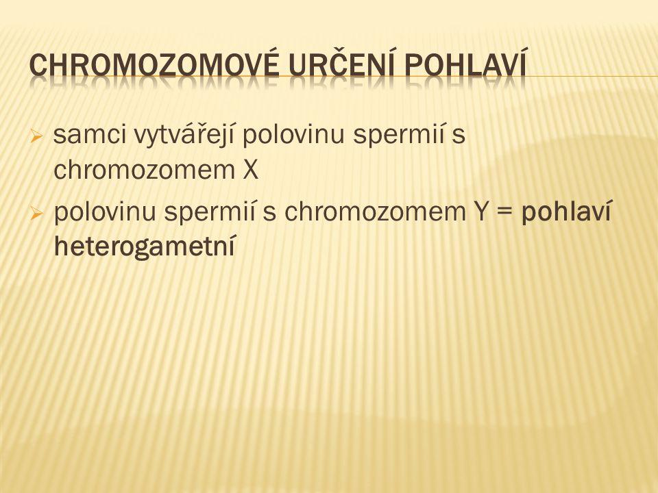  samci vytvářejí polovinu spermií s chromozomem X  polovinu spermií s chromozomem Y = pohlaví heterogametní