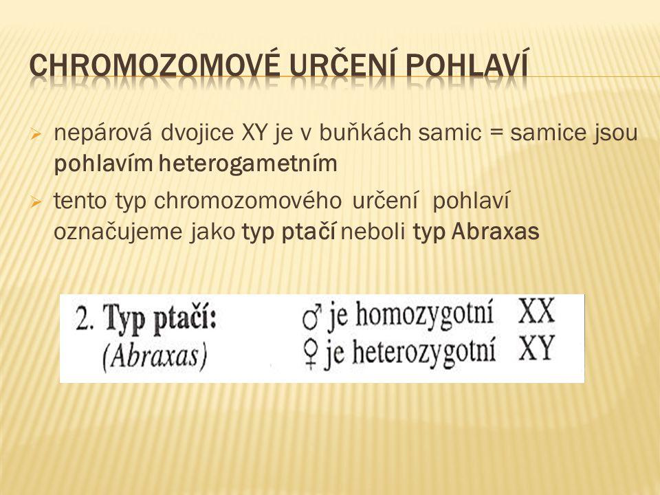  nepárová dvojice XY je v buňkách samic = samice jsou pohlavím heterogametním  tento typ chromozomového určení pohlaví označujeme jako typ ptačí neboli typ Abraxas