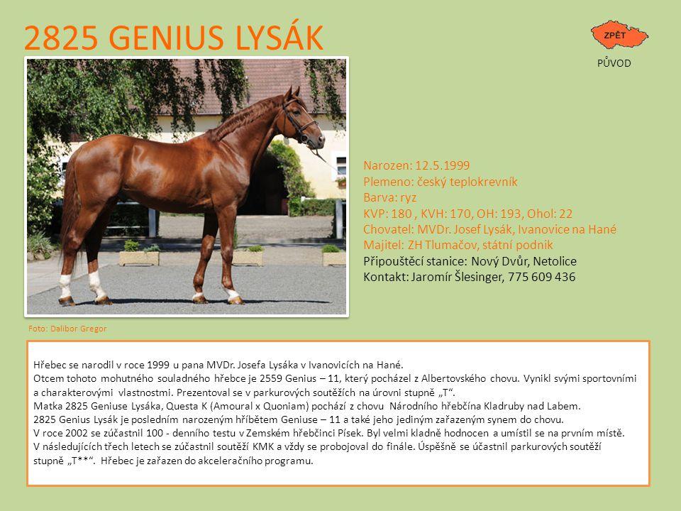 2825 GENIUS LYSÁK PŮVOD Hřebec se narodil v roce 1999 u pana MVDr. Josefa Lysáka v Ivanovicích na Hané. Otcem tohoto mohutného souladného hřebce je 25
