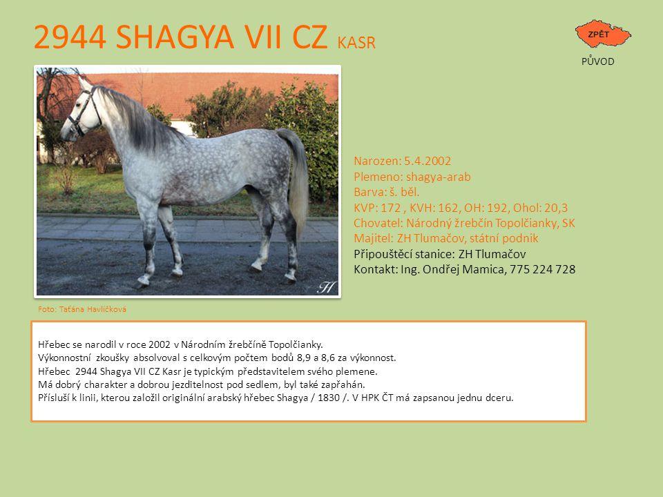 2944 SHAGYA VII CZ KASR PŮVOD Foto: Taťána Havlíčková Narozen: 5.4.2002 Plemeno: shagya-arab Barva: š. běl. KVP: 172, KVH: 162, OH: 192, Ohol: 20,3 Ch