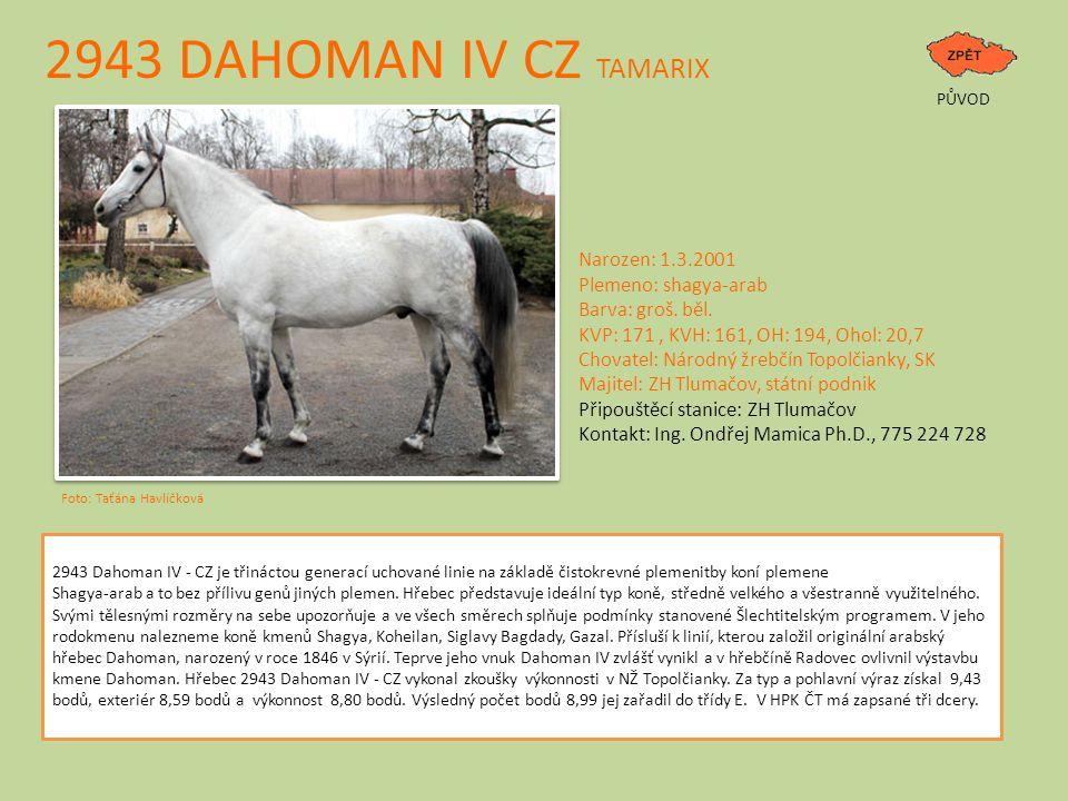 2943 DAHOMAN IV CZ TAMARIX PŮVOD Foto: Taťána Havlíčková Narozen: 1.3.2001 Plemeno: shagya-arab Barva: groš. běl. KVP: 171, KVH: 161, OH: 194, Ohol: 2