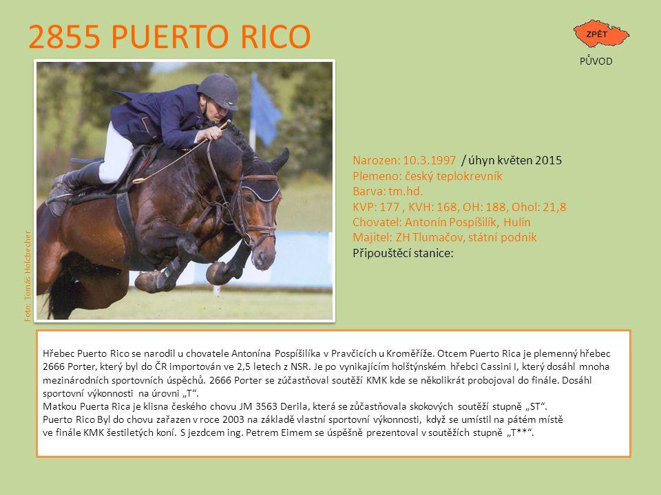 2855 PUERTO RICO PŮVOD Hřebec Puerto Rico se narodil u chovatele Antonína Pospíšilíka v Pravčicích u Kroměříže. Otcem Puerto Rica je plemenný hřebec 2