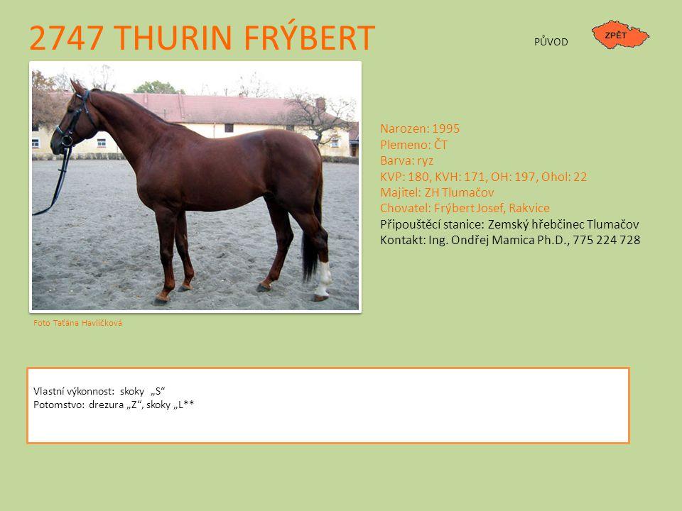 """2747 THURIN FRÝBERT PŮVOD Vlastní výkonnost: skoky """"S"""" Potomstvo: drezura """"Z"""", skoky """"L** Narozen: 1995 Plemeno: ČT Barva: ryz KVP: 180, KVH: 171, OH:"""
