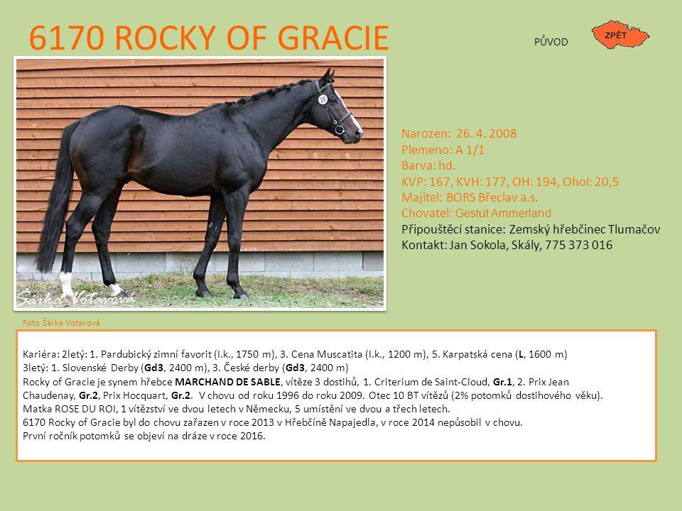 6170 ROCKY OF GRACIE Narozen: 26.4. 2008 Plemeno: A 1/1 Barva: hd.