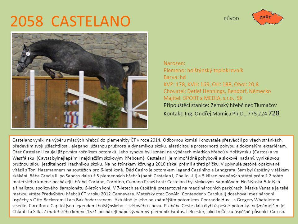 2058 CASTELANO PŮVOD Narozen: Plemeno: holštýnský teplokrevník Barva: hd KVP: 178, KVH: 169, OH: 188, Ohol: 20,8 Chovatel: Detlef Hennings, Bendorf, N