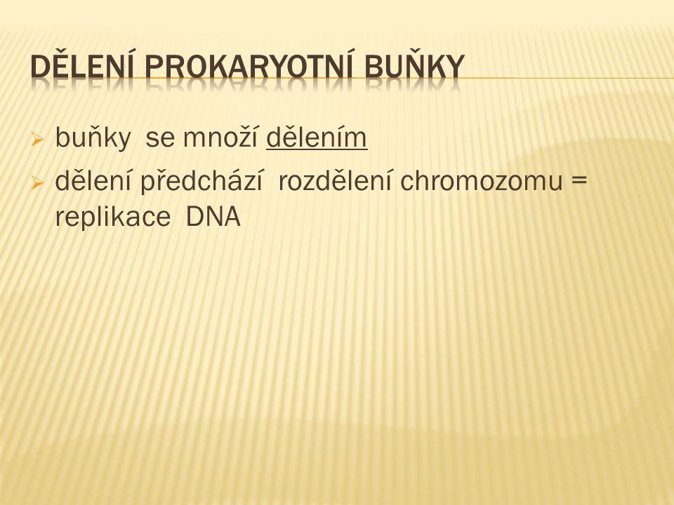  buňky se množí dělením  dělení předchází rozdělení chromozomu = replikace DNA
