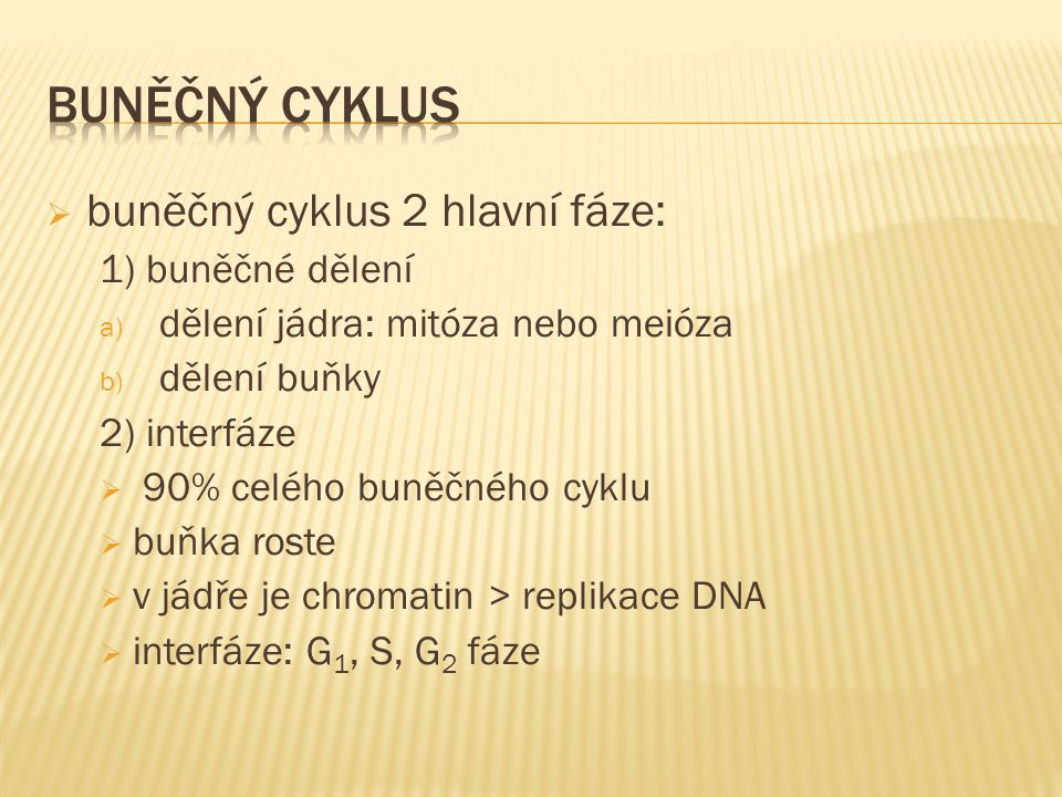  buněčný cyklus 2 hlavní fáze: 1) buněčné dělení a) dělení jádra: mitóza nebo meióza b) dělení buňky 2) interfáze  90% celého buněčného cyklu  buňka roste  v jádře je chromatin > replikace DNA  interfáze: G 1, S, G 2 fáze