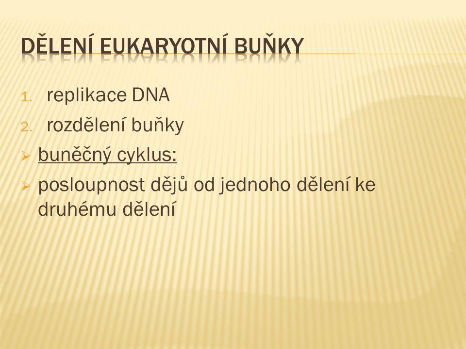 1. replikace DNA 2. rozdělení buňky  buněčný cyklus:  posloupnost dějů od jednoho dělení ke druhému dělení