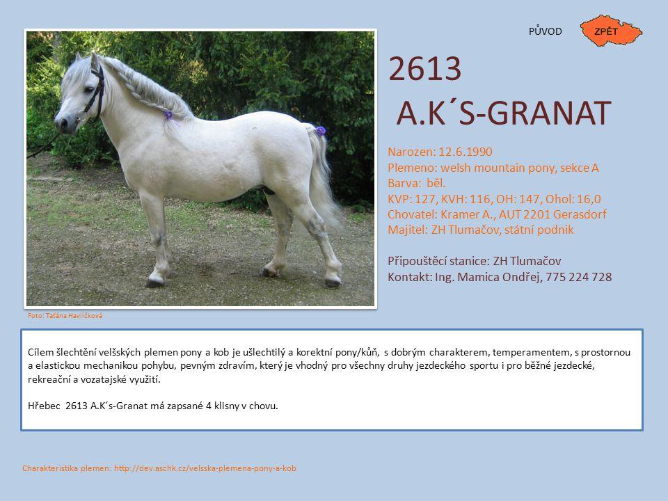 2613 A.K´S-GRANAT PŮVOD Narozen: 12.6.1990 Plemeno: welsh mountain pony, sekce A Barva: běl. KVP: 127, KVH: 116, OH: 147, Ohol: 16,0 Chovatel: Kramer