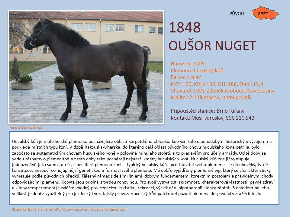1848 OUŠOR NUGET Huculský kůň je malé horské plemeno, pocházející z oblasti Karpatského oblouku, kde vznikalo dlouhodobým historickým vývojem na podkl
