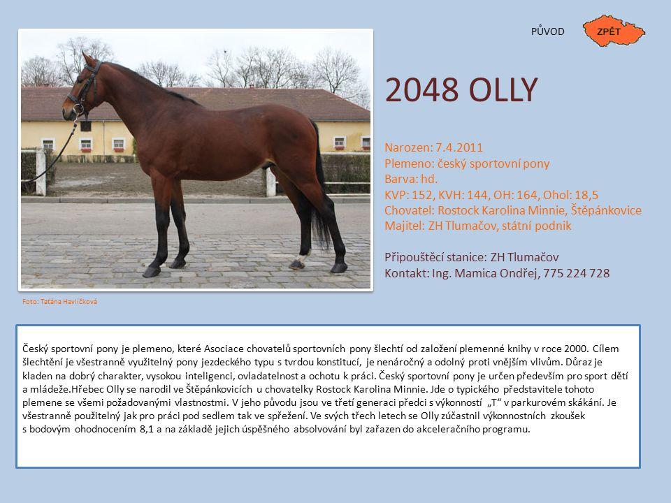 PŮVOD 2048 OLLY Narozen: 7.4.2011 Plemeno: český sportovní pony Barva: hd. KVP: 152, KVH: 144, OH: 164, Ohol: 18,5 Chovatel: Rostock Karolina Minnie,