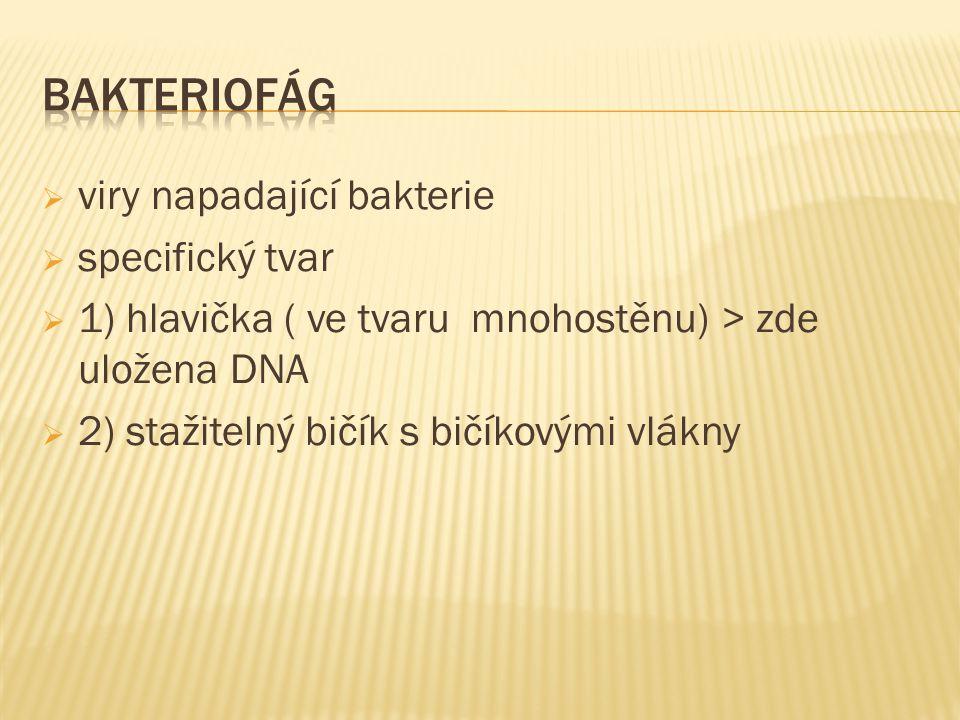 viry napadající bakterie  specifický tvar  1) hlavička ( ve tvaru mnohostěnu) > zde uložena DNA  2) stažitelný bičík s bičíkovými vlákny