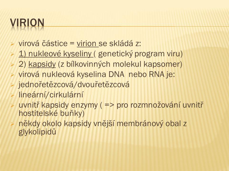  virová částice = virion se skládá z:  1) nukleové kyseliny ( genetický program viru)  2) kapsidy (z bílkovinných molekul kapsomer)  virová nukleová kyselina DNA nebo RNA je:  jednořetězcová/dvouřetězcová  lineární/cirkulární  uvnitř kapsidy enzymy ( => pro rozmnožování uvnitř hostitelské buňky)  někdy okolo kapsidy vnější membránový obal z glykolipidů