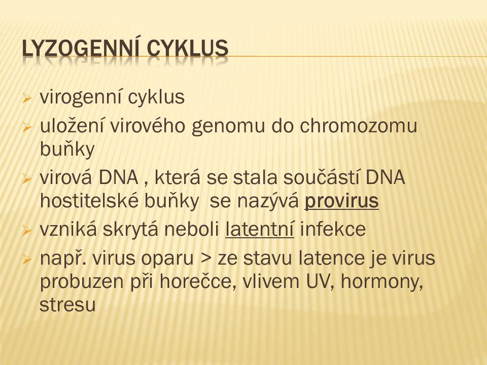  virogenní cyklus  uložení virového genomu do chromozomu buňky  virová DNA, která se stala součástí DNA hostitelské buňky se nazývá provirus  vzniká skrytá neboli latentní infekce  např.