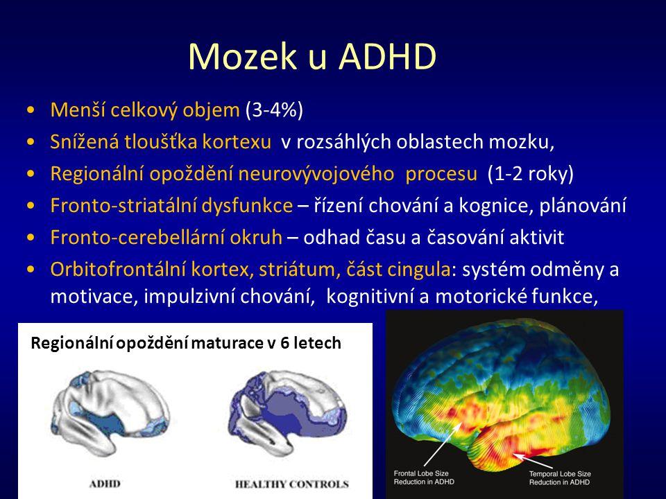 Mozek u ADHD Menší celkový objem (3-4%) Snížená tloušťka kortexu v rozsáhlých oblastech mozku, Regionální opoždění neurovývojového procesu (1-2 roky)