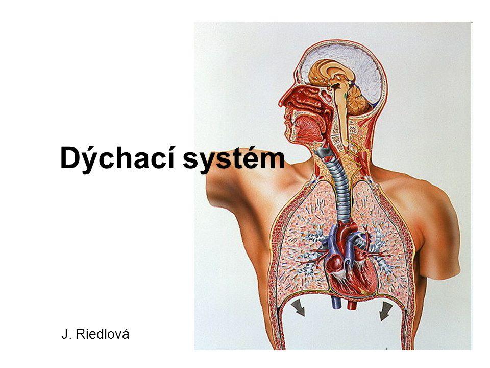 Dýchací systém J. Riedlová