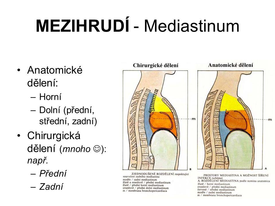 MEZIHRUDÍ - Mediastinum Anatomické dělení: –Horní –Dolní (přední, střední, zadní) Chirurgická dělení (mnoho ): např. –Přední –Zadní