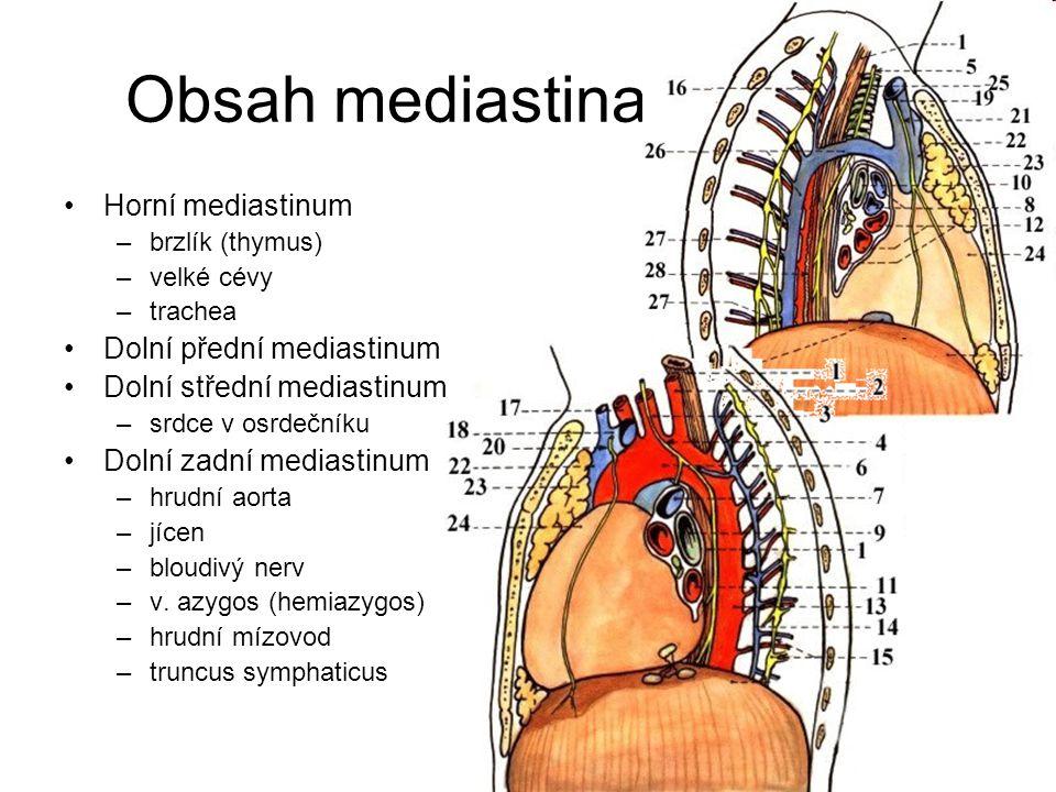 Obsah mediastina Horní mediastinum –brzlík (thymus) –velké cévy –trachea Dolní přední mediastinum Dolní střední mediastinum –srdce v osrdečníku Dolní
