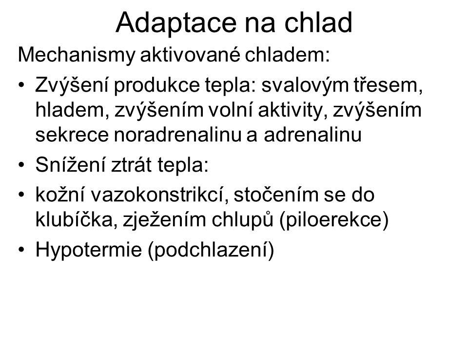 Adaptace na chlad Mechanismy aktivované chladem: Zvýšení produkce tepla: svalovým třesem, hladem, zvýšením volní aktivity, zvýšením sekrece noradrenalinu a adrenalinu Snížení ztrát tepla: kožní vazokonstrikcí, stočením se do klubíčka, zježením chlupů (piloerekce) Hypotermie (podchlazení)