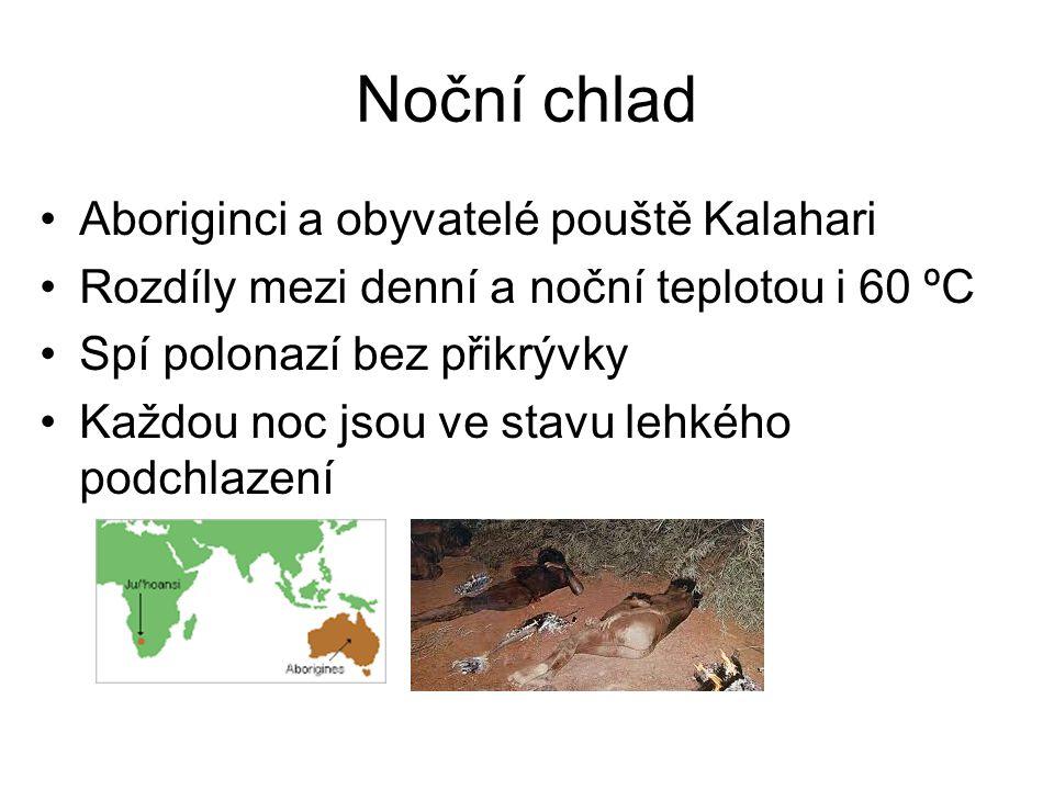 Noční chlad Aboriginci a obyvatelé pouště Kalahari Rozdíly mezi denní a noční teplotou i 60 ºC Spí polonazí bez přikrývky Každou noc jsou ve stavu leh