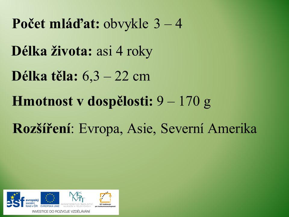 Délka těla: 6,3 – 22 cm Hmotnost v dospělosti: 9 – 170 g Rozšíření: Evropa, Asie, Severní Amerika Délka života: asi 4 roky Počet mláďat: obvykle 3 – 4