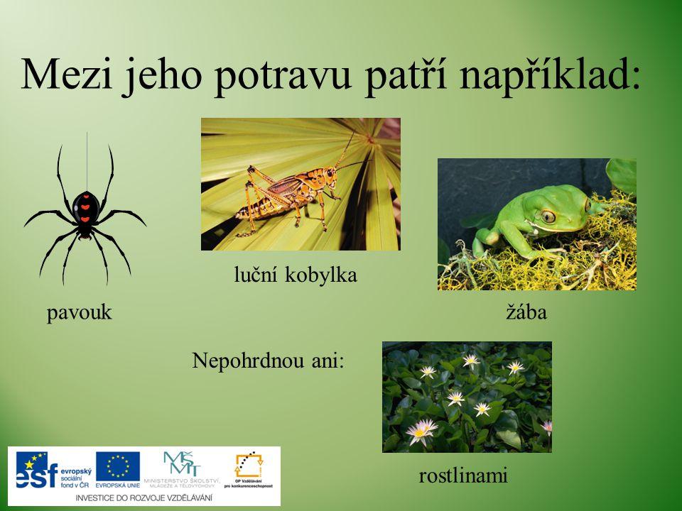 Mezi jeho potravu patří například: Nepohrdnou ani: rostlinami luční kobylka pavoukžába