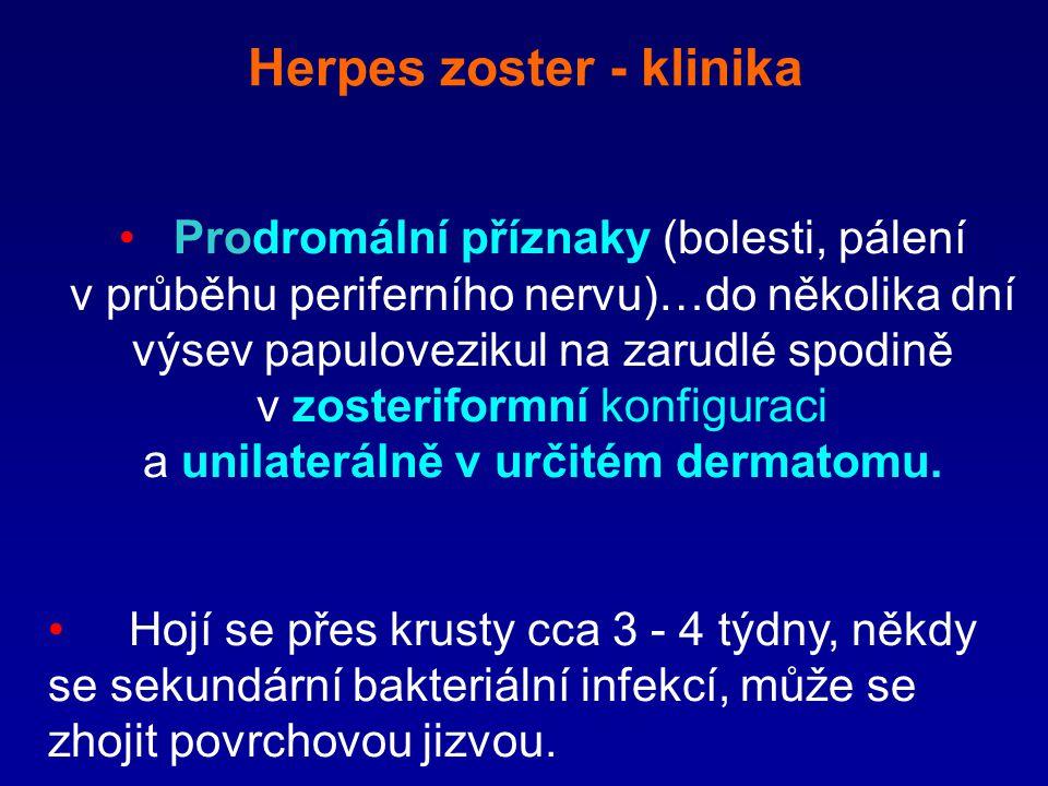 Herpes zoster - klinika Prodromální příznaky (bolesti, pálení v průběhu periferního nervu)…do několika dní výsev papulovezikul na zarudlé spodině v zo