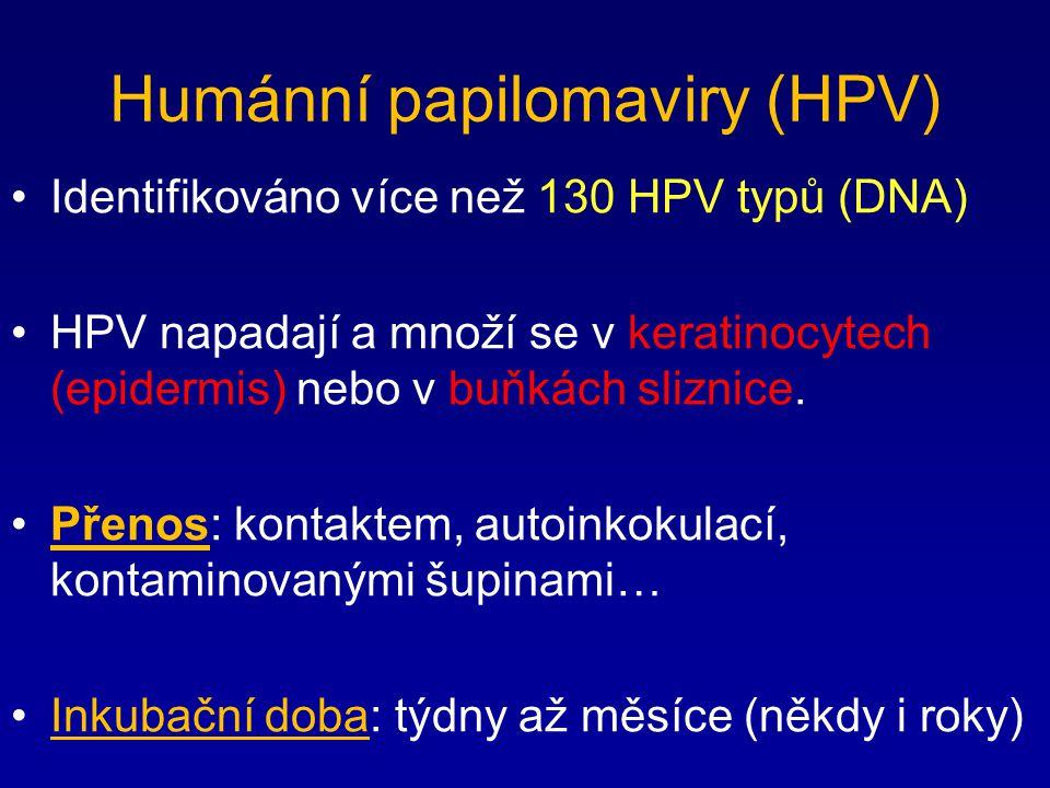 Humánní papilomaviry (HPV) Identifikováno více než 130 HPV typů (DNA) HPV napadají a množí se v keratinocytech (epidermis) nebo v buňkách sliznice. Př