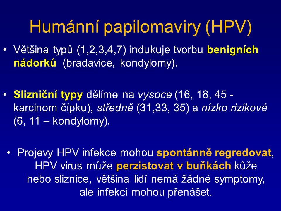 Humánní papilomaviry (HPV) Většina typů (1,2,3,4,7) indukuje tvorbu benigních nádorků (bradavice, kondylomy). Slizniční typy dělíme na vysoce (16, 18,
