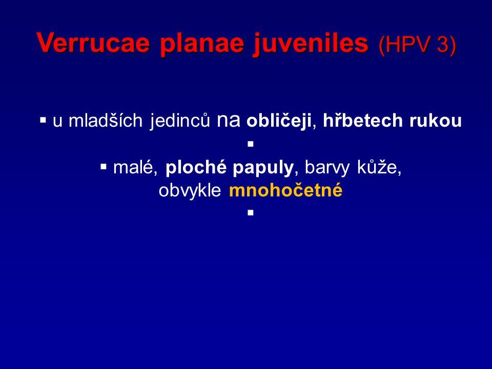 Verrucae planae juveniles (HPV 3)  u mladších jedinců na obličeji, hřbetech rukou   malé, ploché papuly, barvy kůže, obvykle mnohočetné 