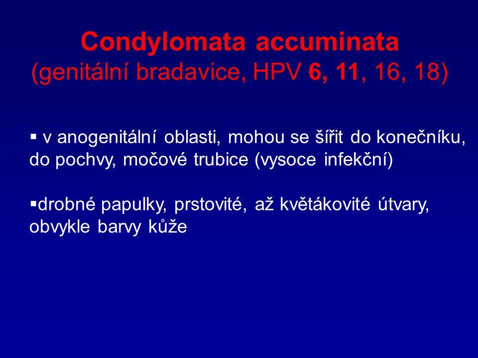Condylomata accuminata (genitální bradavice, HPV 6, 11, 16, 18)  v anogenitální oblasti, mohou se šířit do konečníku, do pochvy, močové trubice (vyso