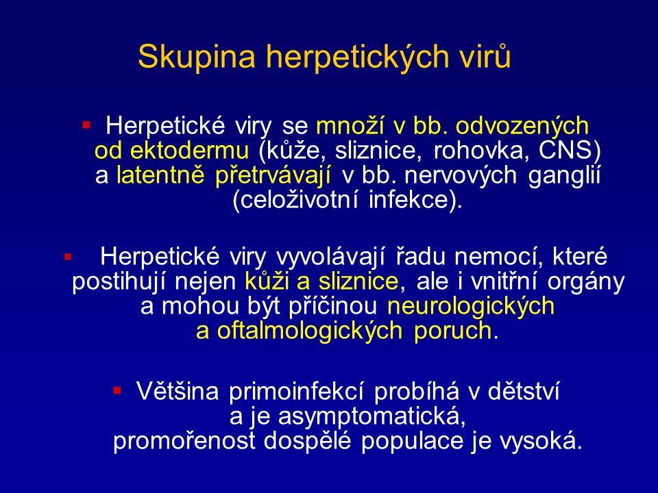 Skupina herpetických virů  Herpetické viry se množí v bb. odvozených od ektodermu (kůže, sliznice, rohovka, CNS) a latentně přetrvávají v bb. nervový