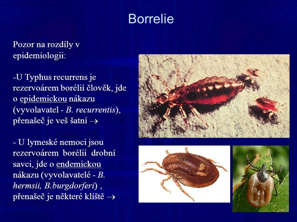 Borrelie Pozor na rozdíly v epidemiologii: -U Typhus recurrens je rezervoárem borélií člověk, jde o epidemickou nákazu (vyvolavatel - B.