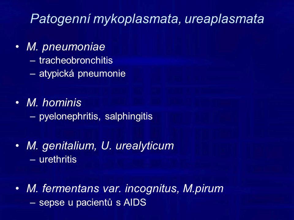 Patogenní mykoplasmata, ureaplasmata M.pneumoniae –tracheobronchitis –atypická pneumonie M.